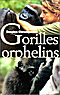 Gorilles orphelins Despina Chronopoulos